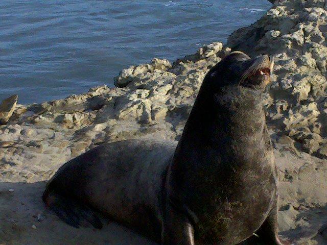 Seal 1